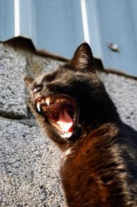 Cat calling!